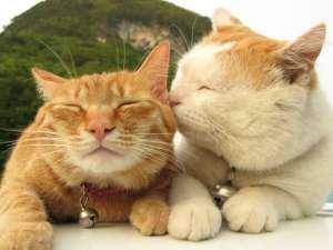 猫吐没消化的猫粮